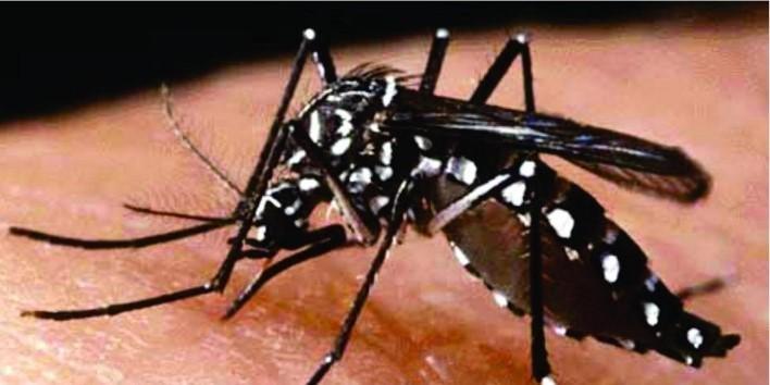 Em tempo de coronavírus dengue mata 19 em Mato Grosso do Sul: estado já registra 36 mil casos da doença este ano