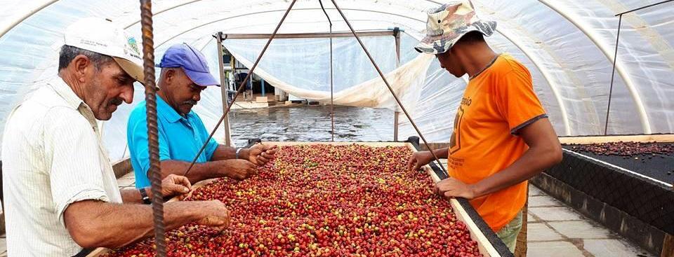 Parcerias ajudam a escoar café produzido no Rio durante a pandemia: produto fluminense está entre os melhores do pais
